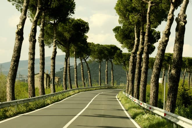 Arbres plantés le long d'une route