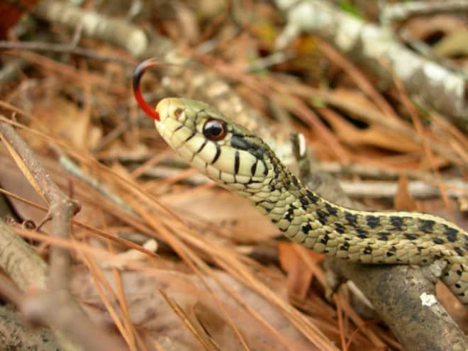 Un serpent. Image d'illustration.