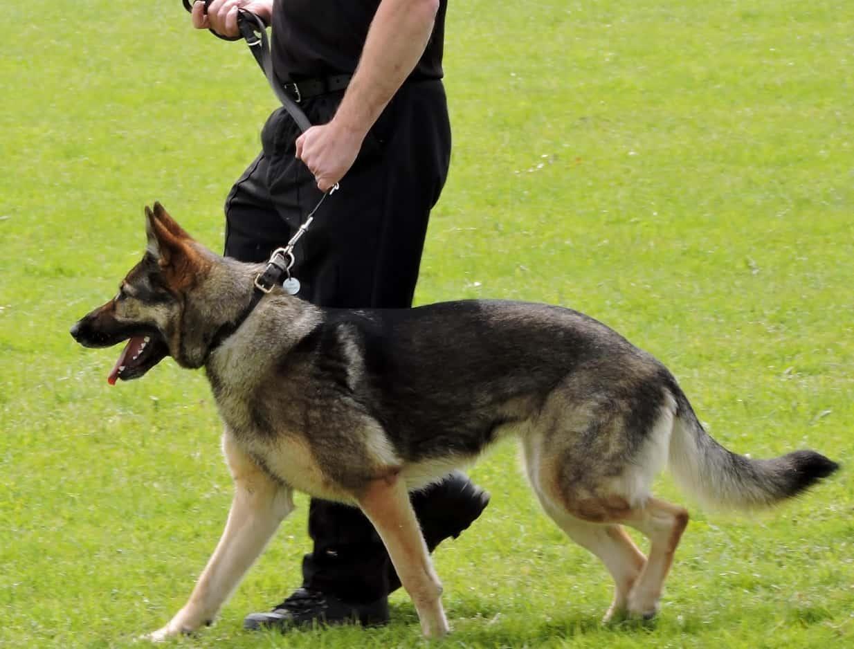 Policier et son chien