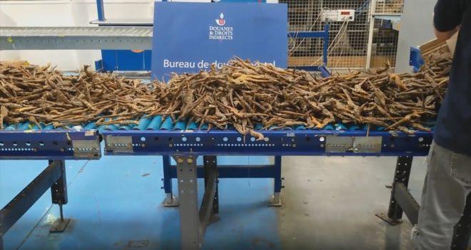 2.000 hippocampes morts saisis par la douane