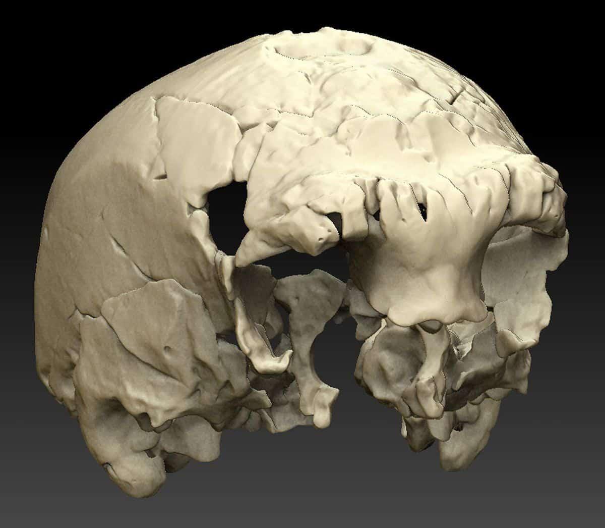 Reconstitution virtuelle du crâne d'Aroeira
