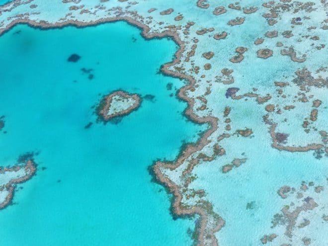 Les coraux de la Grande Barrière en péril — Australie