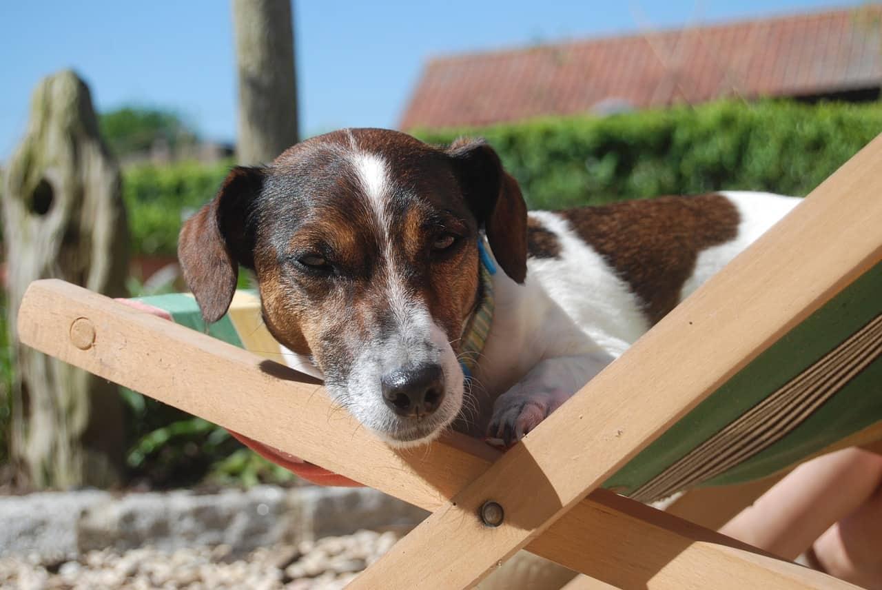 Le Havre : l'homme retrouvé noyé avec son chien voulait sauver son animal