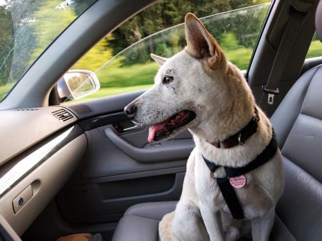 Un chien enfermé dans une voiture meurt de chaud — Gard