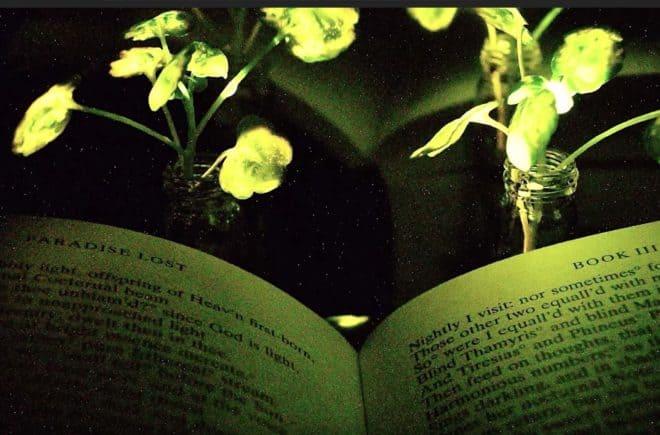 De verte lumineuse la plante selon les chercheurs du mit for Plante lumineuse
