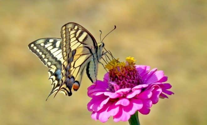 Un papillon. Image d'illustration.