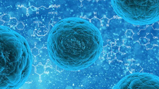 Des cellules souches. Image d'illustration.