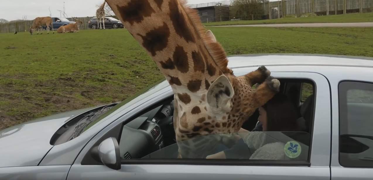 royaume uni ils remontent la vitre de leur voiture alors