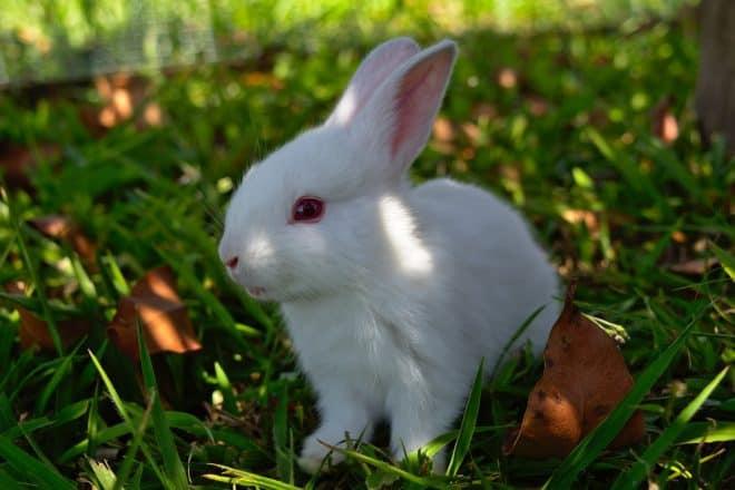 Un lapin. Image d'illustration.