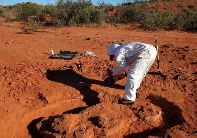 Les restes d'Ingenia prima, découvert en Argentine