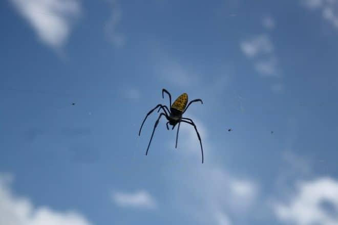 Une araignée. Image d'illustration.