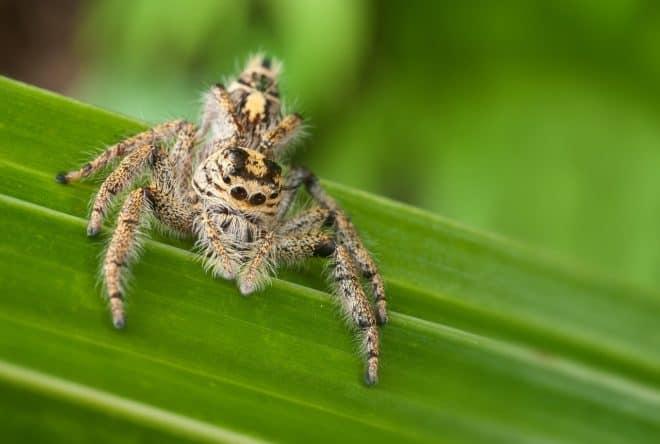 Une araignée tropicale. Image d'illustration.