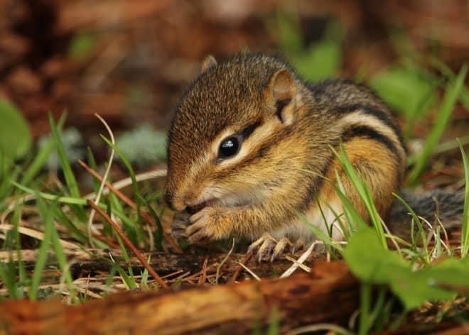 Un bébé écureuil. Image d'illustration.