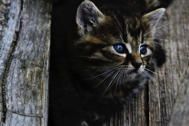 Un chaton. Image d'illustration.