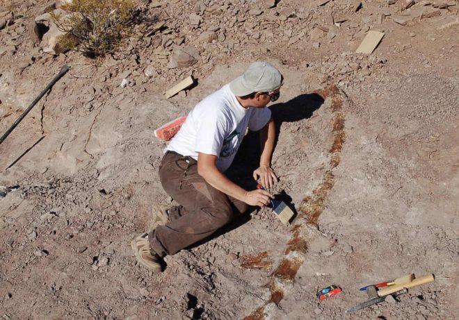 L'un des chercheurs pendant les fouilles ayant permis la découverte du Lavocatisaurus agrioensis.