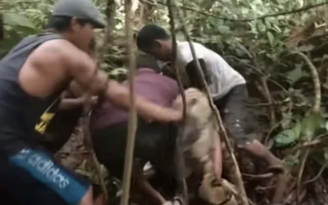Le python capturé en Indonésie en novembre 2018.