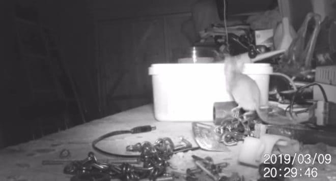 Une souris range les outils d'un bricoleur.