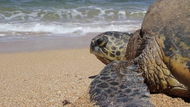 Une tortue sur une plage. Image d'illustration.