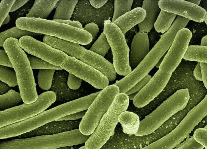 Illustration. Des bactéries.