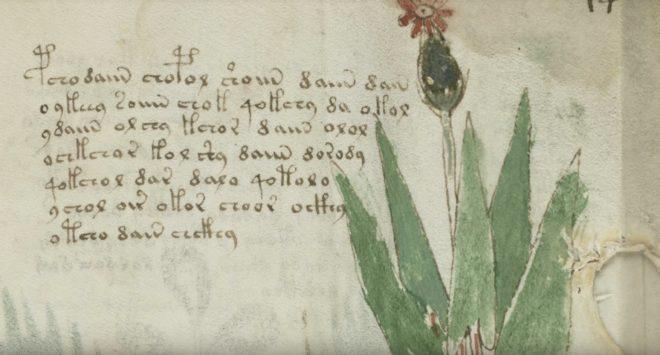 Un extrait du manuscrit de Voynich.