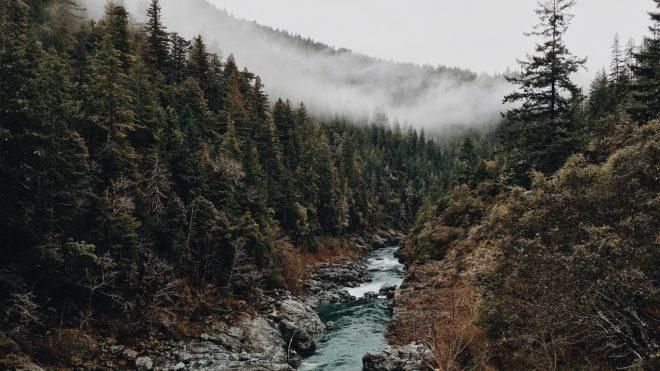 Un ruisseau. Image d'illustration.