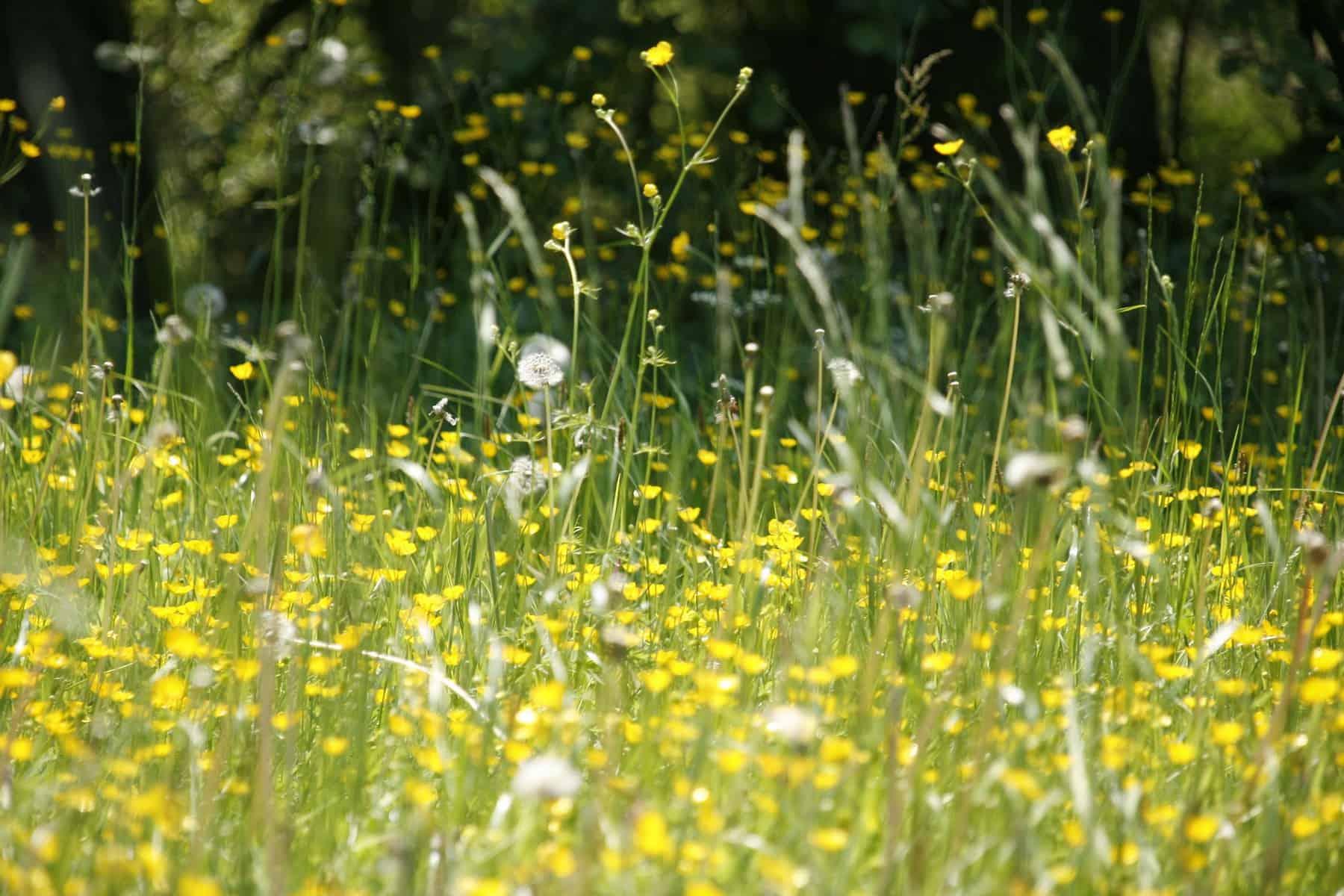 Pollens de graminées : alerte rouge dans sept départements