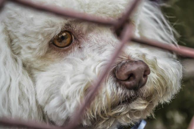 Un chien abandonné. Image d'illustration.