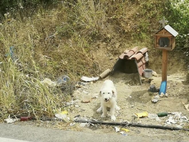 Le chien refusant de quitter le lieux de l'accident mortel de son maître.