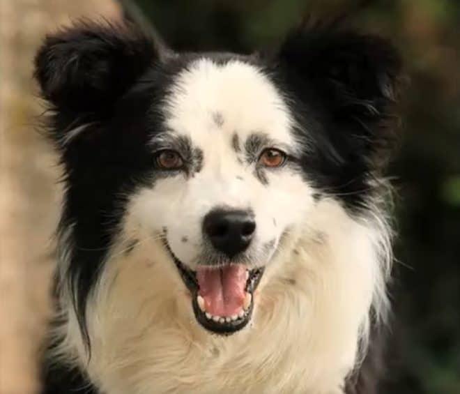 Le chien Gribouille que la SPA avait fait adopter après une fugue.