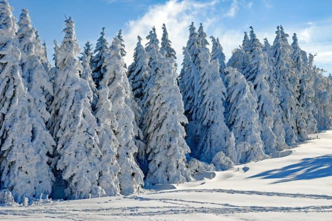Un paysage hivernal. Image d'illustration.