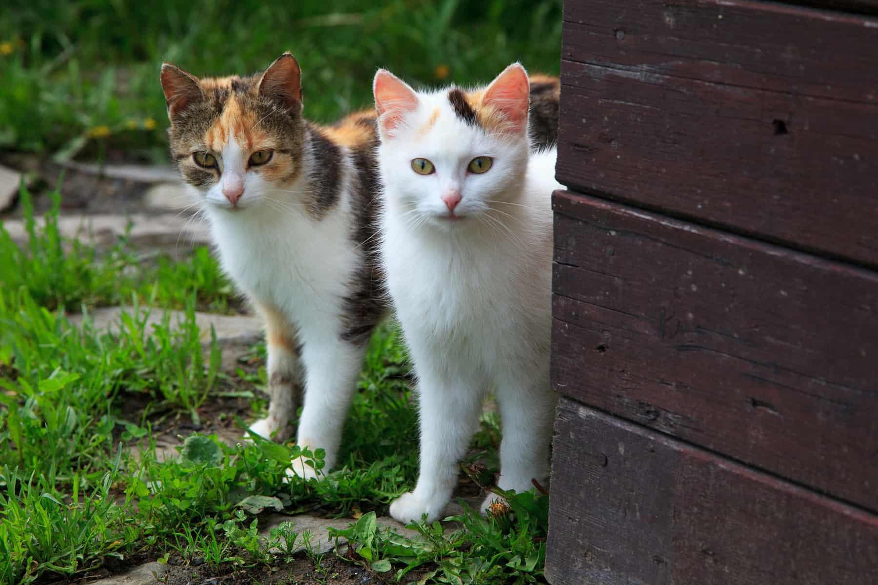 Covid-19 : Un algorithme désigne le chat comme hôte potentiel des futures souches de SARS-CoV-2 - 24matins.fr
