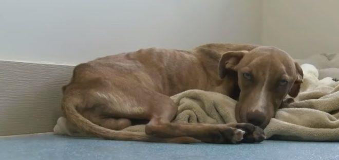 Miracle, le chien retrouvé aux Bahamas.