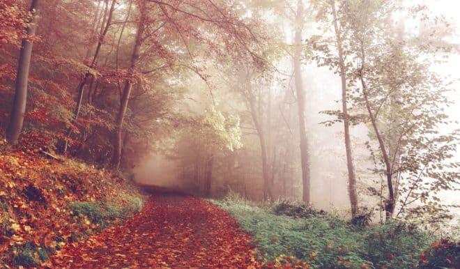 Illustration. Un sentier en forêt.
