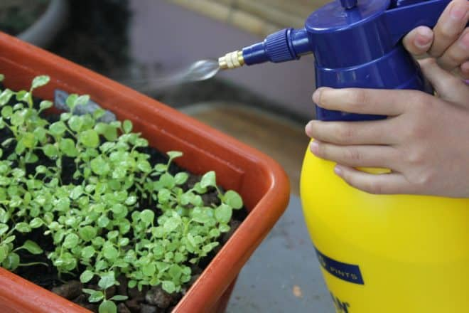 Illustration. Un traitement pour les plantes.