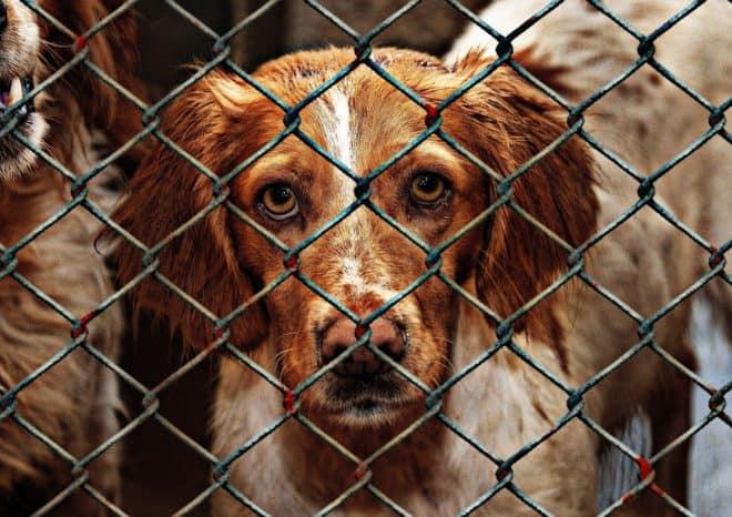 Des animaux dans un refuge. Image d'illustration.