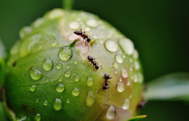 Des fourmis. Image d'illustration.