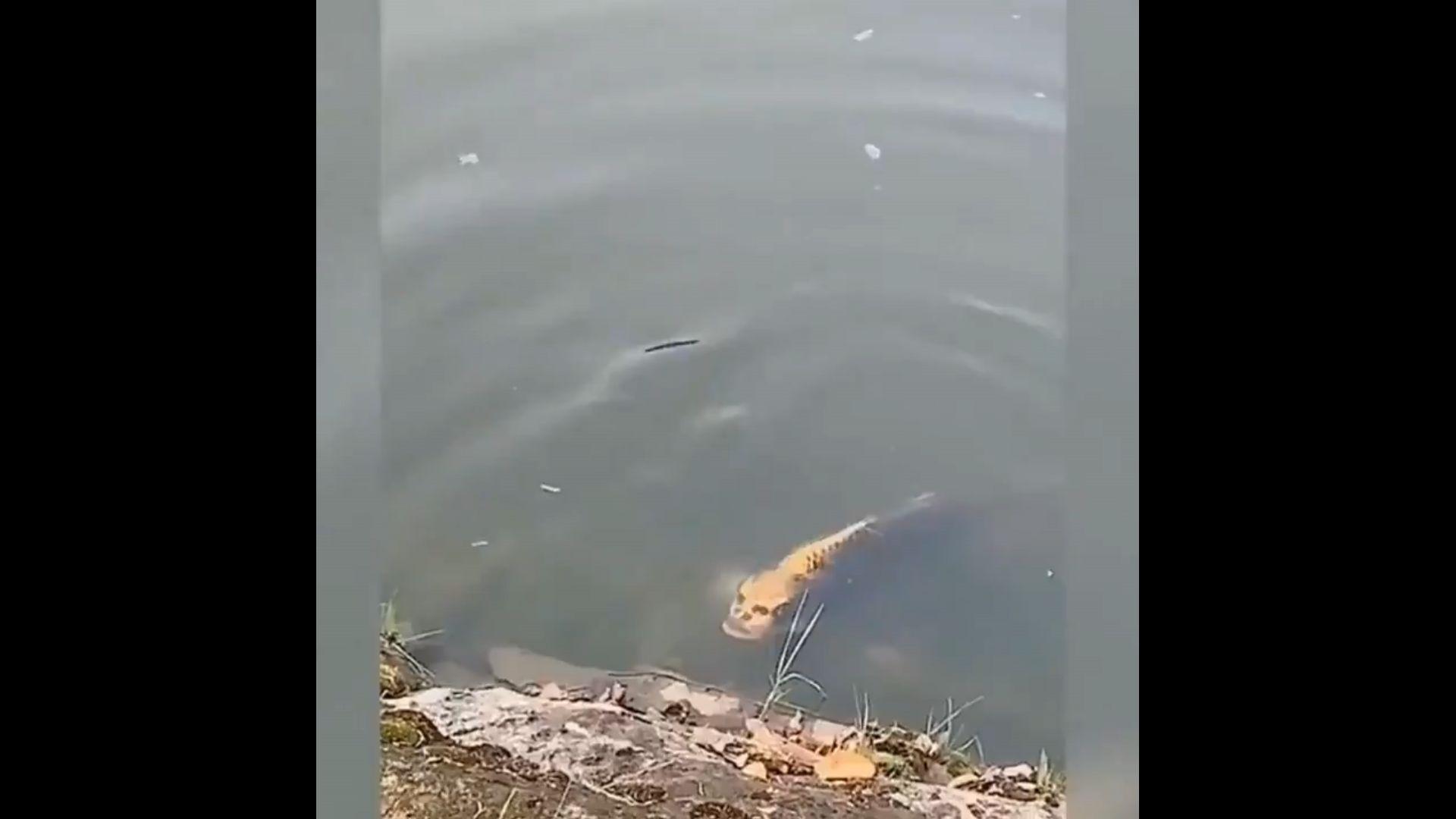 Chine : un poisson à visage humain suscite curiosité et effroi