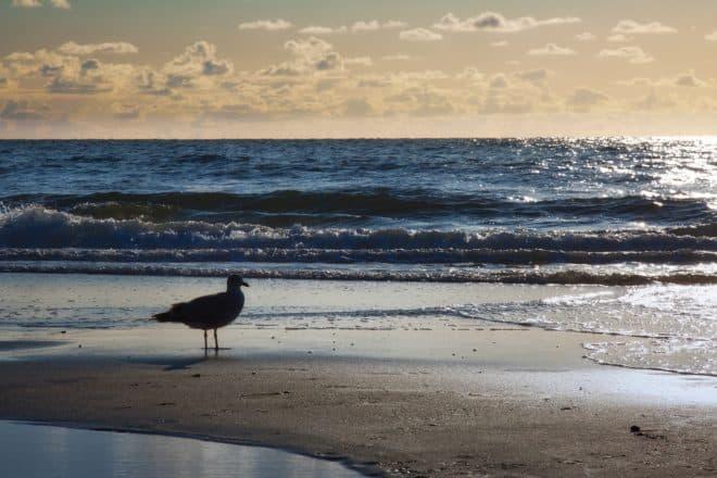 Illustration. Un oiseau sur une plage.