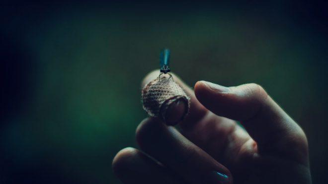 Photo d'illustration. Une luciole.